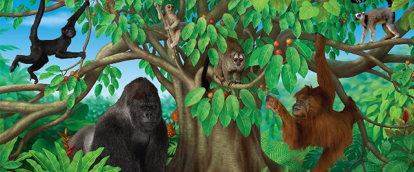 Monkey Business National Museum Of Scotland 600X250